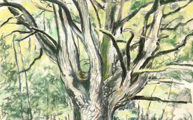 Painting of an oak tree in Wytham Woods