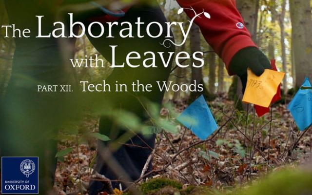 The Laboratory with Leaves
