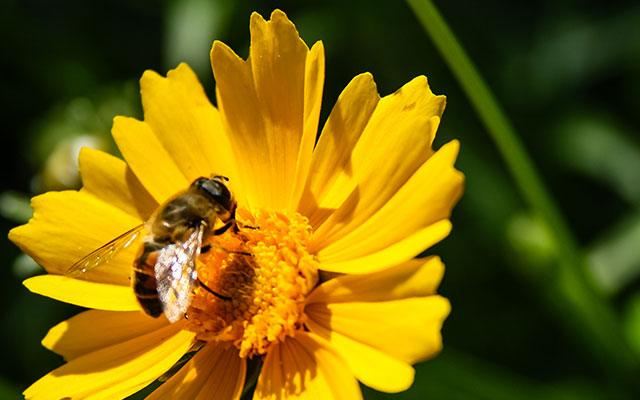 Learn to Identify Bees at Wytham Woods
