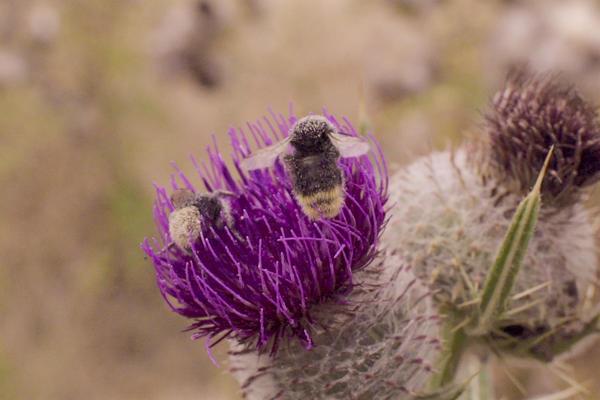 Wytham Bees