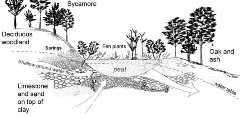 fen diagram