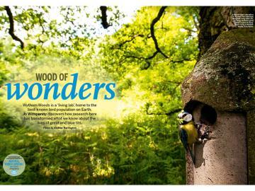 bbc wildlife wytham woods feature