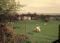 Image of Wytham Abbey and Park across a field of grass, sheep and lambs